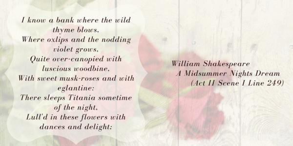 180218 Shakespeare Rose 03